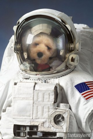 Cute Dog Picture Of The Day:  Dog in Space