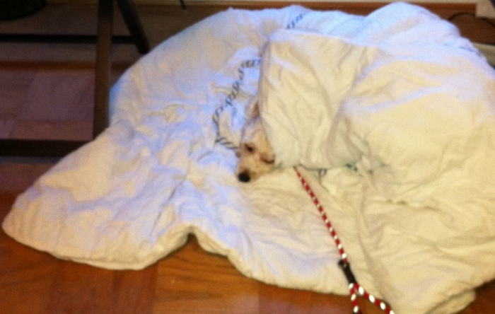 Cute Dog Picture of the Day: Snug as a Bug in a Rug
