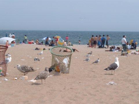 Alarmingly Large Seagulls
