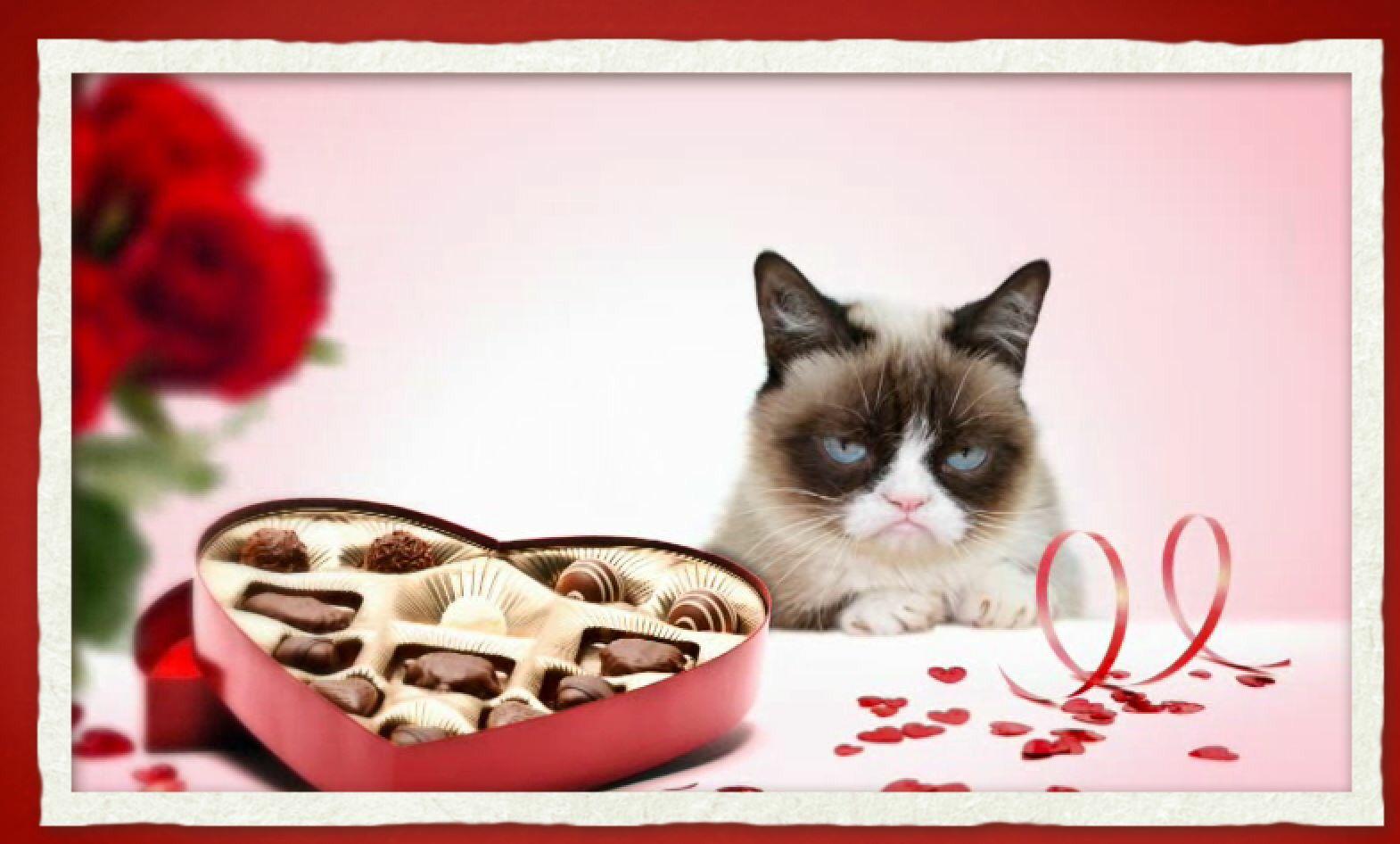 Schön Grumpy Cat Does Valentineu0027s Day